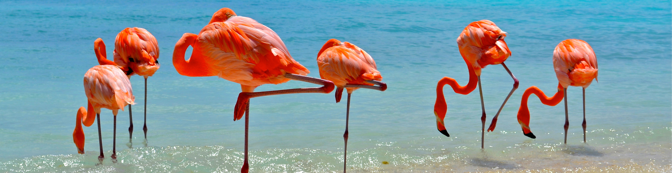 Flamingoes-on-the-Beach.jpg